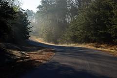 morning walk 1