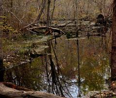 Wood Duck Pond Overflow