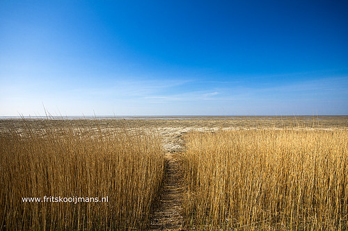 Eb en riet bij Koehool in Friesland