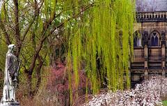"Cincinnati - Spring Grove Cemetery & Arboretum ""Willow Tree Blankets Dexter Mausoleum"""