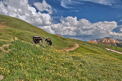 ATV riders inspecting flowers by mountain top road