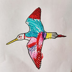 Godwit by Leo, submitted by Clare Best (email)