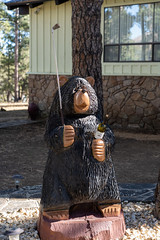 This bear loves golf and wine!