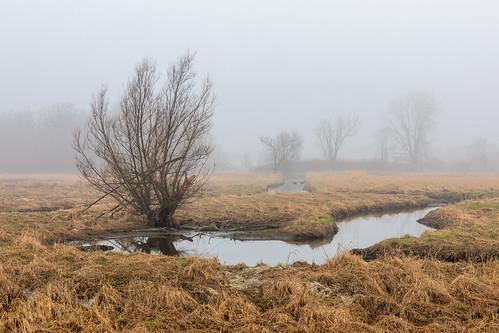 A Foggy Time