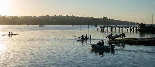 Early morning activity at Catalina Bay, Hobsonville Point, New Zealand