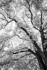 Sky Full Of Leaves