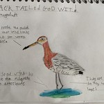 Godwit from Kate L'Amie (@Katelamie) 2 of 2