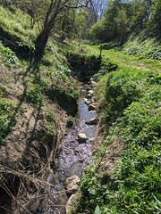 River Tweed at Wark, April 2020