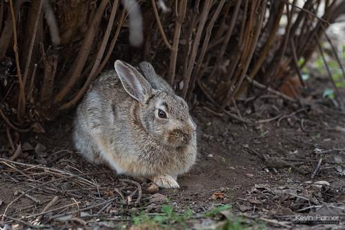 Shady Bunny