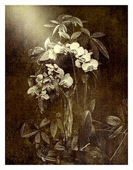 Orchids Amidst Foliage (Subtitle: Orchids in Isolation)