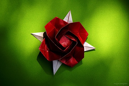 Origami Rose (Shin Han-Gyo)