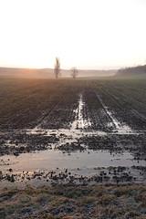 Ice @ Sunrise @ Route de Frenay @ Éloise