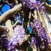 Nature&fleurissement-113-170320-GV