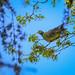 Nature&fleurissement-107-170320-GV