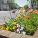 Nature&fleurissement-085-170320-GV