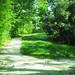 Nature&fleurissement-076-170320-GV