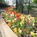 Nature&fleurissement-072-170320-GV