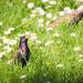 Nature&fleurissement-067-170320-GV