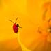 Nature&fleurissement-046-170320-GV