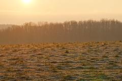 Frost @ Sunrise @ Route de Frenay @ Éloise