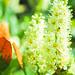 Nature&fleurissement-075-170320-GV