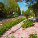 Nature&fleurissement-065-170320-GV