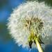 Nature&fleurissement-063-170320-GV