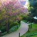 Nature&fleurissement-052-170320-GV