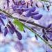 Nature&fleurissement-038-170320-GV