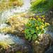 Nature&fleurissement-002-170320-GV