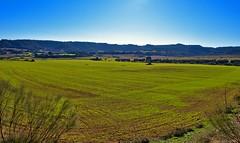 Campos de Aragón