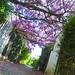 Nature&fleurissement-013-170320-GV