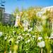 Nature&fleurissement-064-170320-GV