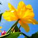 Nature&fleurissement-049-170320-GV