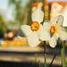 Nature&fleurissement-026-170320-GV