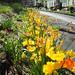 Nature&fleurissement-015-170320-GV