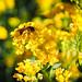 Nature&fleurissement-009-170320-GV
