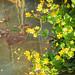 Nature&fleurissement-003-170320-GV