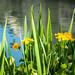 Nature&fleurissement-001-170320-GV