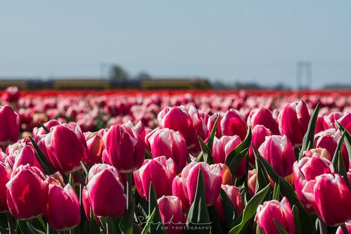 Big Field - Groot Veld