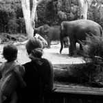 A Day at the Zoo  (Ultrafine eXtreme 100)