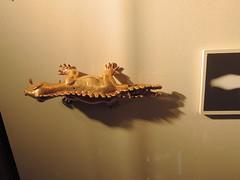 Costa_Rica_Gold_museum_San_Jose_JH_062
