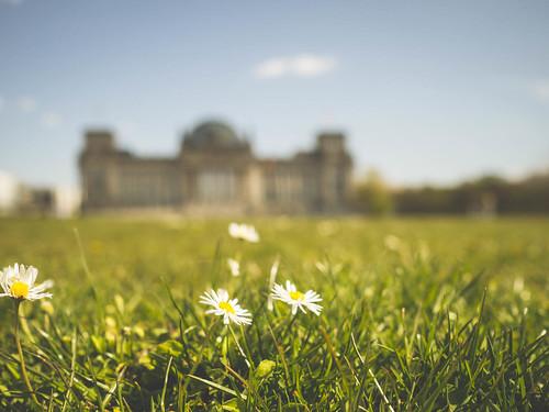 Reichstag und Gänseblümchen
