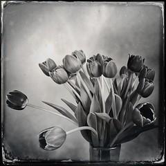 Tulip Time 2020
