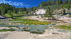 Early summer at Yellowstone