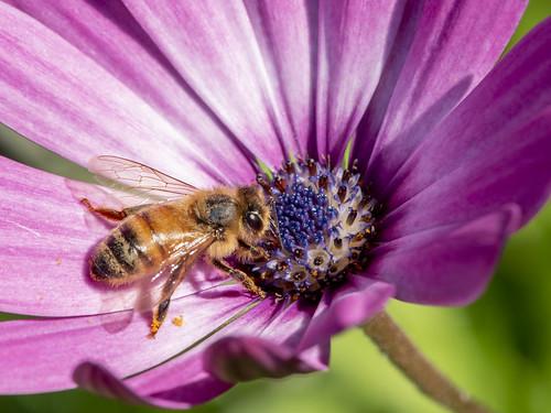 Garden Flowers with bonus Bee