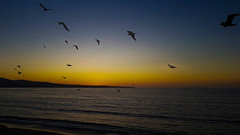 Monterey Bay - fly into the sunset