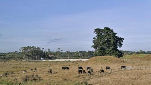 Auckland - Rotorua_1770766_dxo