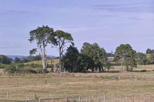 Auckland - Rotorua_1770901_dxo