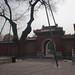 Tree Supports, Beihai Park, Beijing